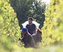 Suite au gel les rendements sont cette année très bas pour la plupart des vignerons de Pouilly-sur-Loire