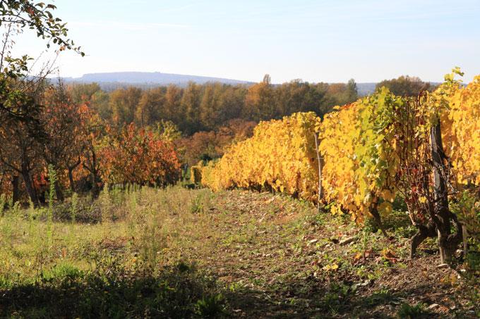 Vignoble de Pouilly