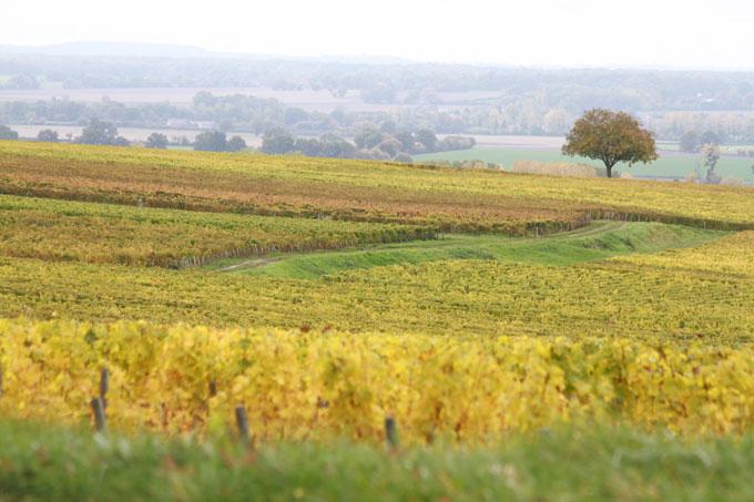 Le vignoble de Pouilly