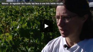 Vidéo Vendanges 2016 Pouilly Fumé