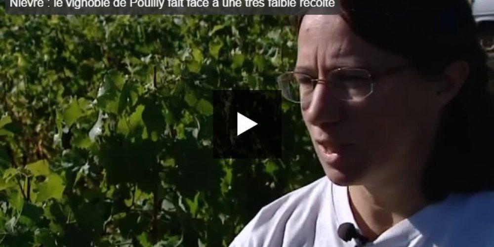 Vidéo : vendanges 2016 à Pouilly-sur-Loire