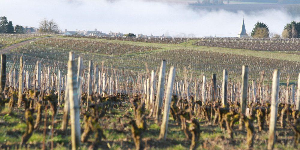 Le printemps s'installe à Pouilly-sur-Loire
