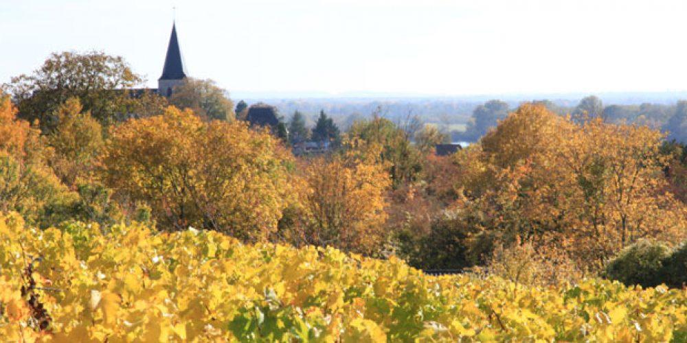 Pouilly-sur-Loire Automne 2015